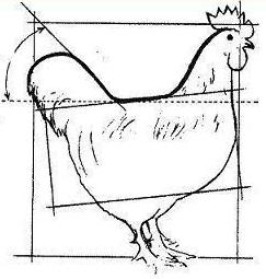 poule - Poule Marans - les standards Coq%20net