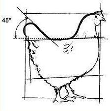 poule - Poule Marans - les standards Poule-net